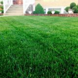 Lawn Repair & Replacement