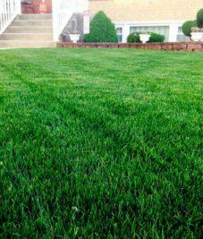 Lawn Closeup
