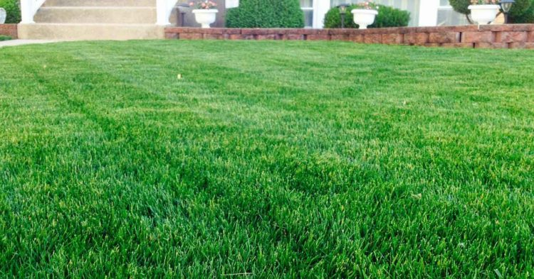 TML Lawn Fertilization Program